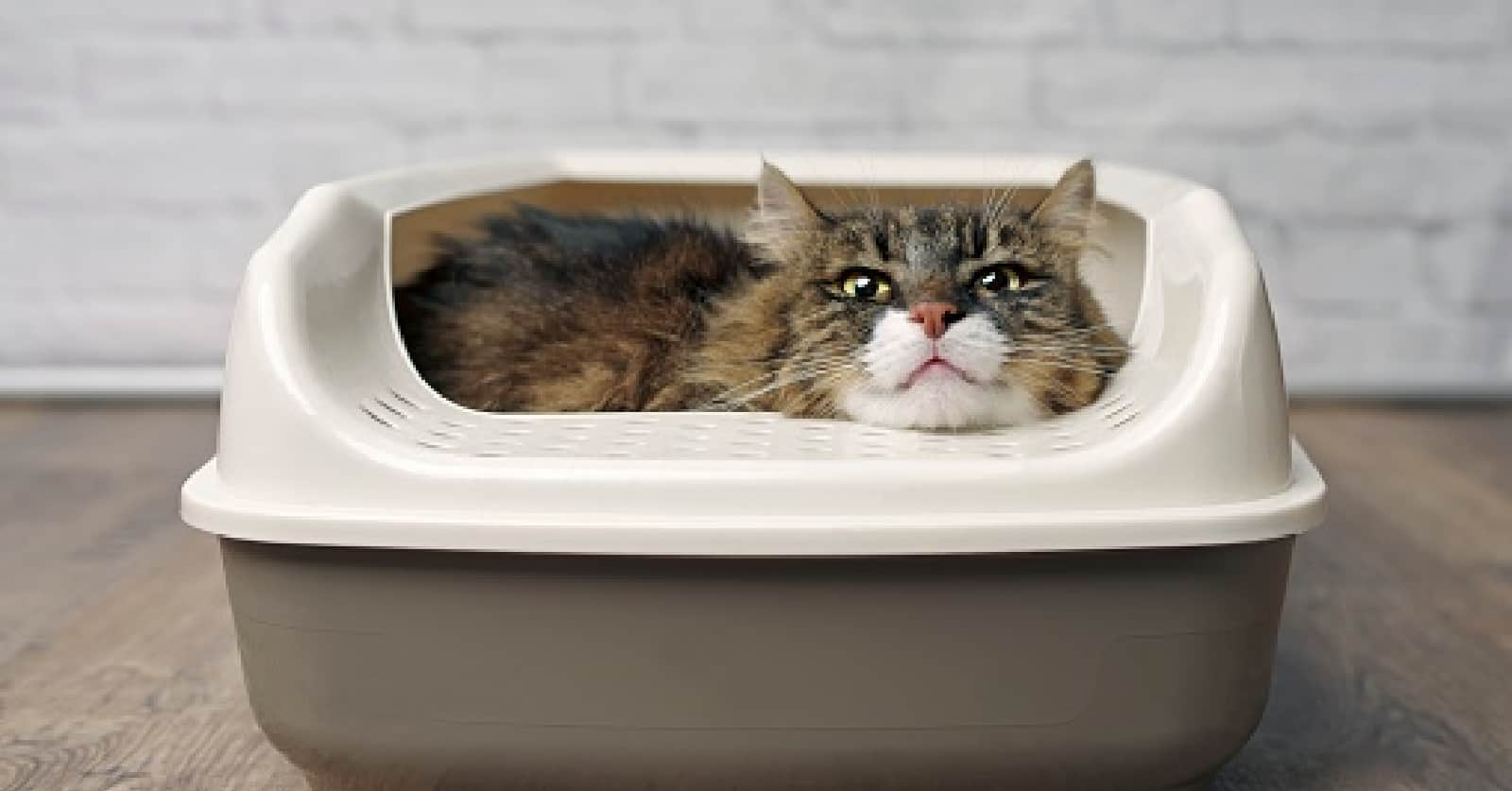 Can two cats use the same litter box? If so, are there reasons why they shouldn't? Read on for a complete and detailed guide!