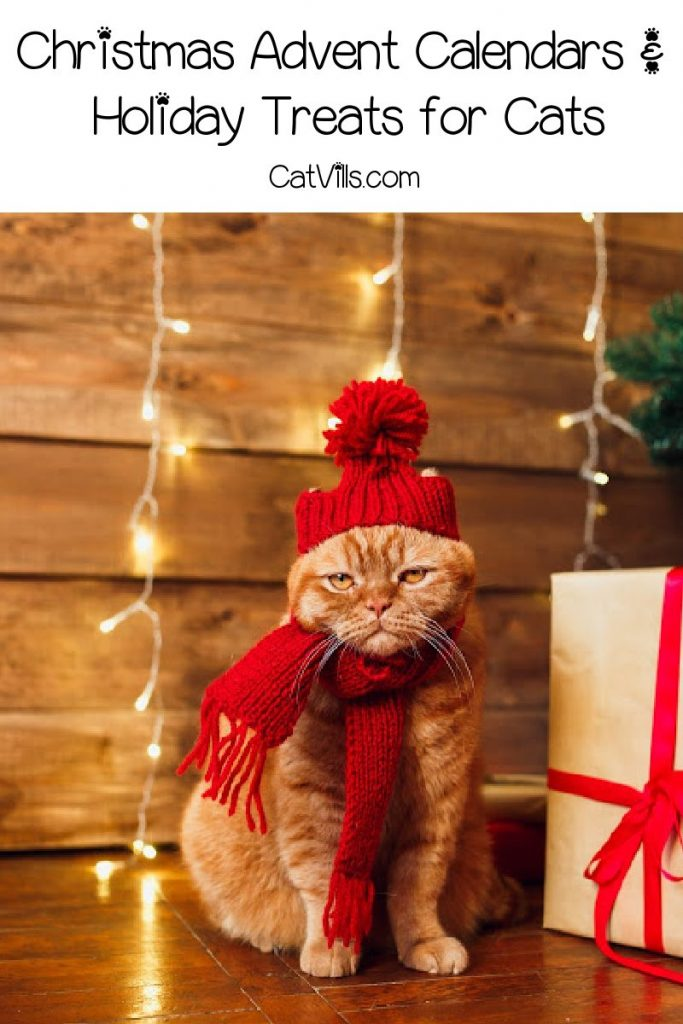 Tis the season for adorable Christmas advent calendars and holiday treats for cats! Check out our favorite limited-edition gifts for cats!