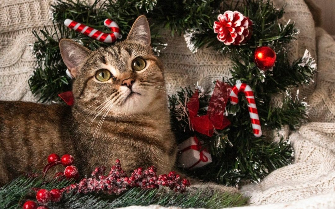8 Adorable Christmas Advent Calendars & Limited-Edition Holiday Treats for Cats