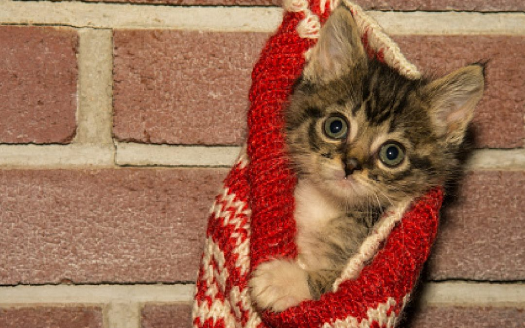 10 Adorable Stocking Stuffers For Cat Lovers