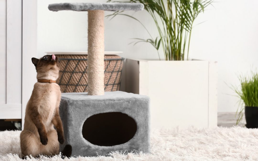 What to do When Your Cat Ignores Their Cat Tree