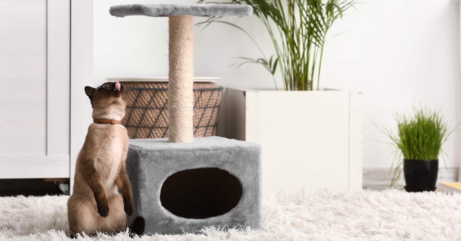 Feeling frustrated because your cat ignores their cat tree after you spent so much money on it? Check out our guide on what to do!
