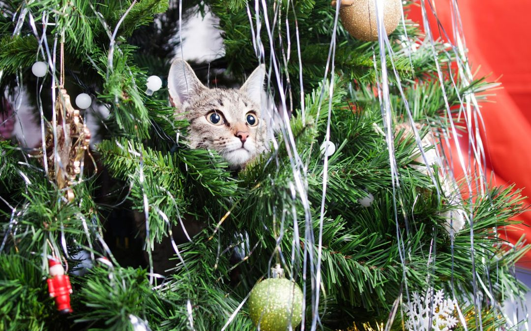 10 Cat Safe Christmas Tree Alternatives for a Non-Crafty Person