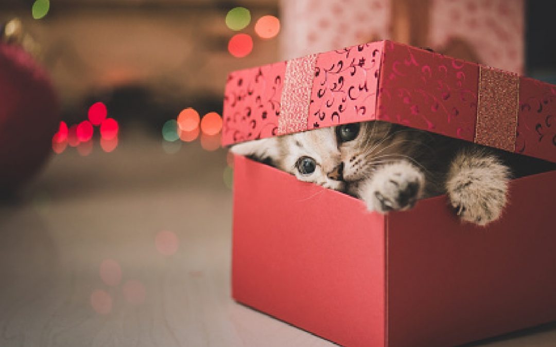 10 Outstanding Gift Ideas For Cats (for Holidays & Beyond!)