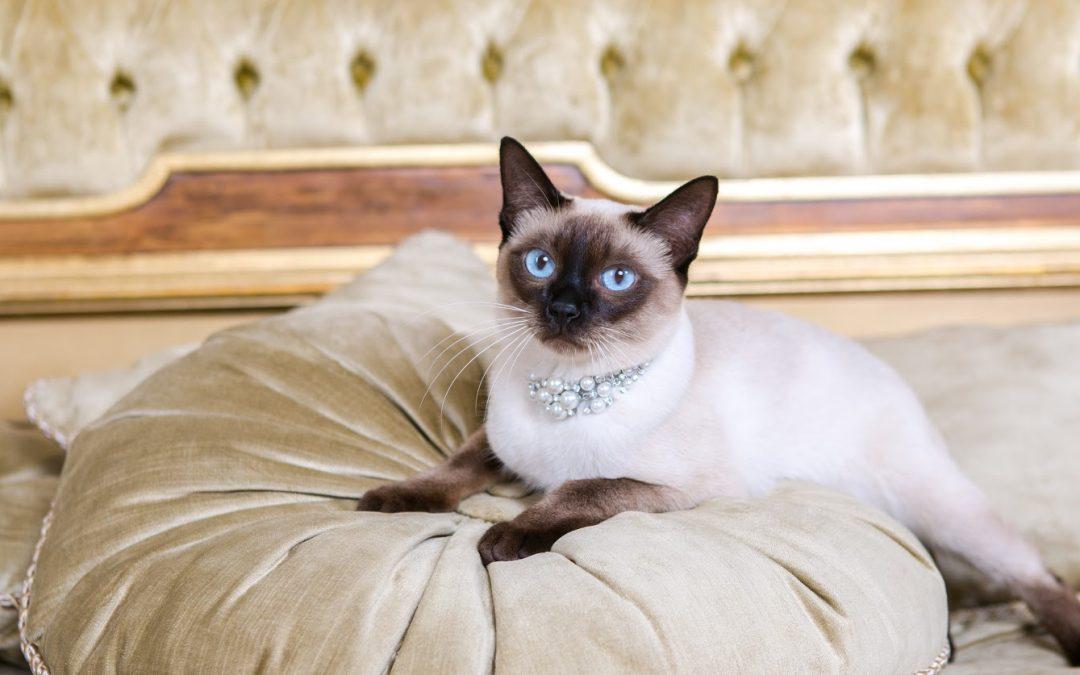100 Luxury Cat Names for Totally Posh Kitties