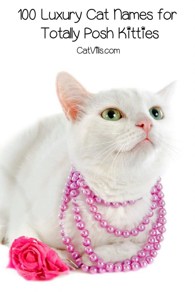 If glitz and glamor are your thing, you'll love these luxury cat names! Check them out and find your kitty's totally posh moniker!