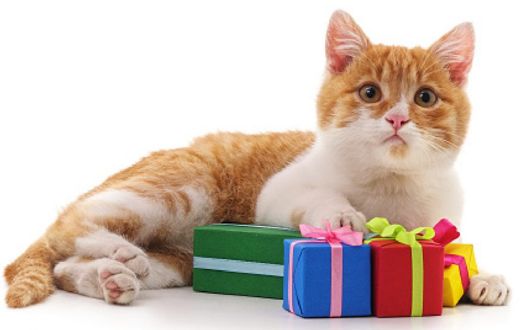 10 Incredibly Unique & Cool Luxury Gifts For Cat Lovers