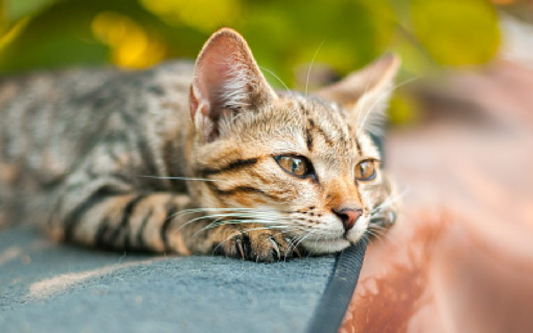 Single Kitten Syndrome – Is it Real and How Do You Treat It?