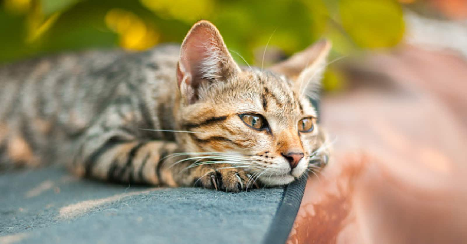 Single kitten syndrome- is it real? How do you treat it?>