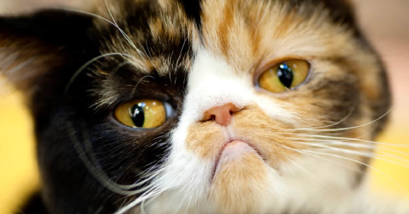 is single cat syndrome a real thing?