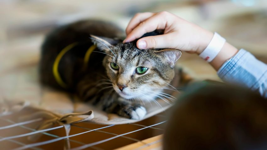 Cat adoption remorse is a very real thing, You're not alone. Read on to learn what to do and how to cope when you regret getting your cat.