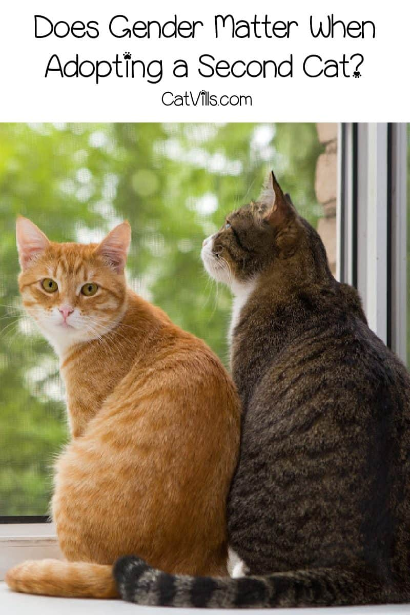If you're about to get a second cat, you might wonder which gender cats get along better or what gender cat is better. Find out!