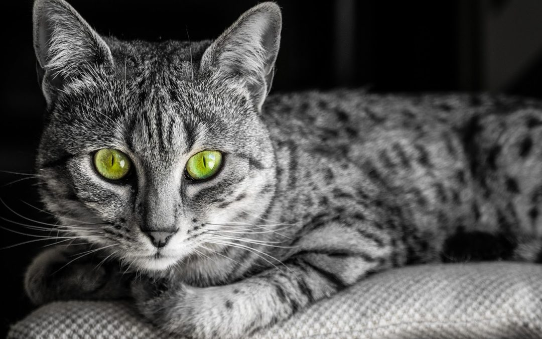 Green-Eyed Cat Names: 100 Stunning Ideas for Males & Females