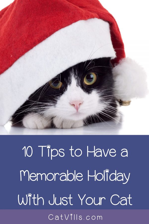 Spending the holidays alone with just you and your cat? Read on for ten tips to make it a memorable and special occasion together!