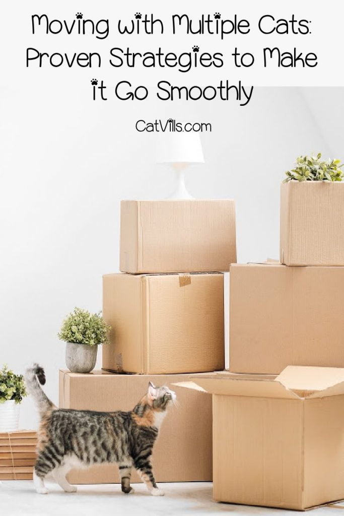 Moving with multiple cats sounds scary, but it doesn't have to be the stuff nightmares are made of. Just follow these proven strategies!