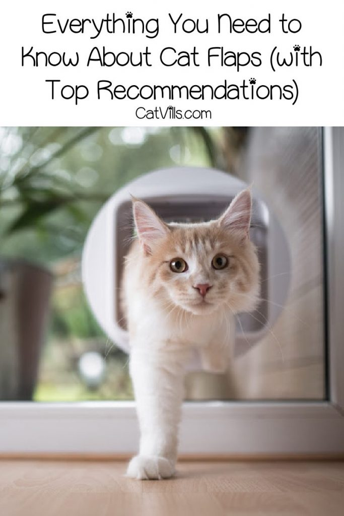 Looking for a cat flap but have no idea where to start? Check out our complete guide- including recommendations and even some tips on finding a cat flap fitter!