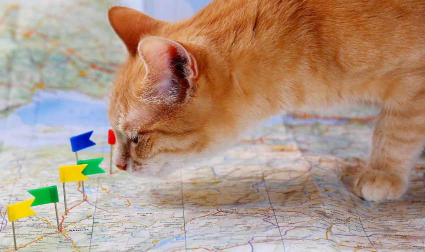 From cities to seas to towering mountains, the world is full of beautiful ideas for geography cat names. Check out 100 that we really love!