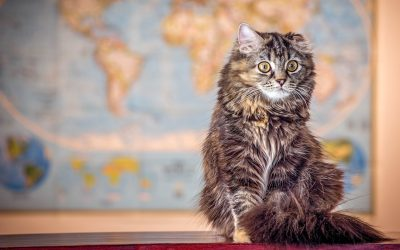 100 Fantastic Geography Cat Names for Males & Females