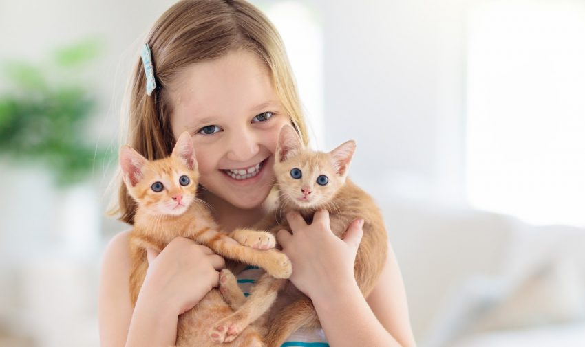 "Needs tips on ""how to convince my parents to get a cat""? Check out our guide to getting the kitty of your dreams after mom and dad said ""no."""