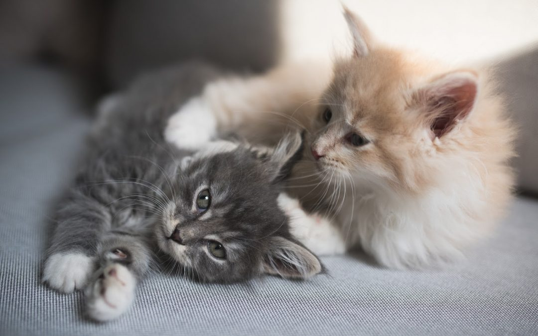 How to Set Up Your House for Two Cats Or More (Complete Guide)
