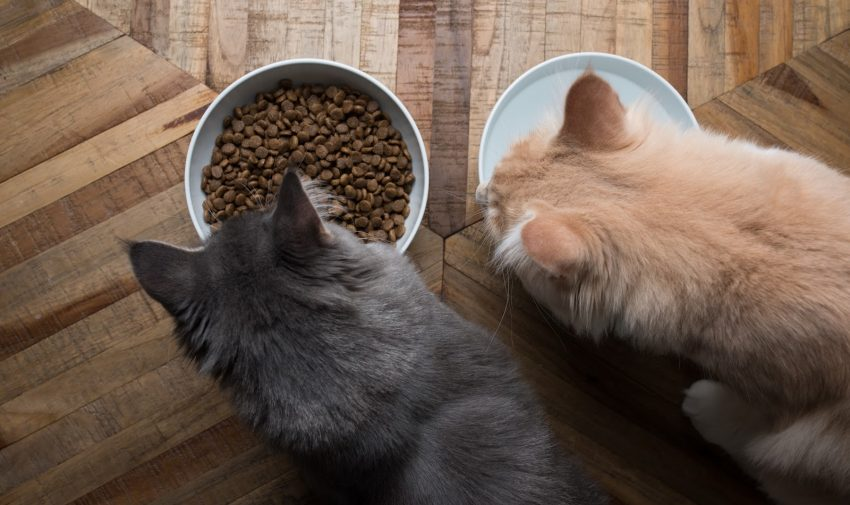 Need to know how to set up your house for two cats or more? Read on for our complete guide, including apartment tips!