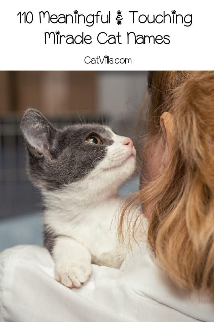If miracle cat names is what you're looking for, then this is the place to be! We have 110 ideas for your new feline friend. Take a look!