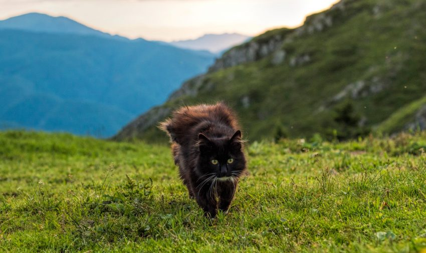 If you're looking for a cool list of mountain cat names for your new kitten, then this is the place to be! Check out 100 ideas that we adore!