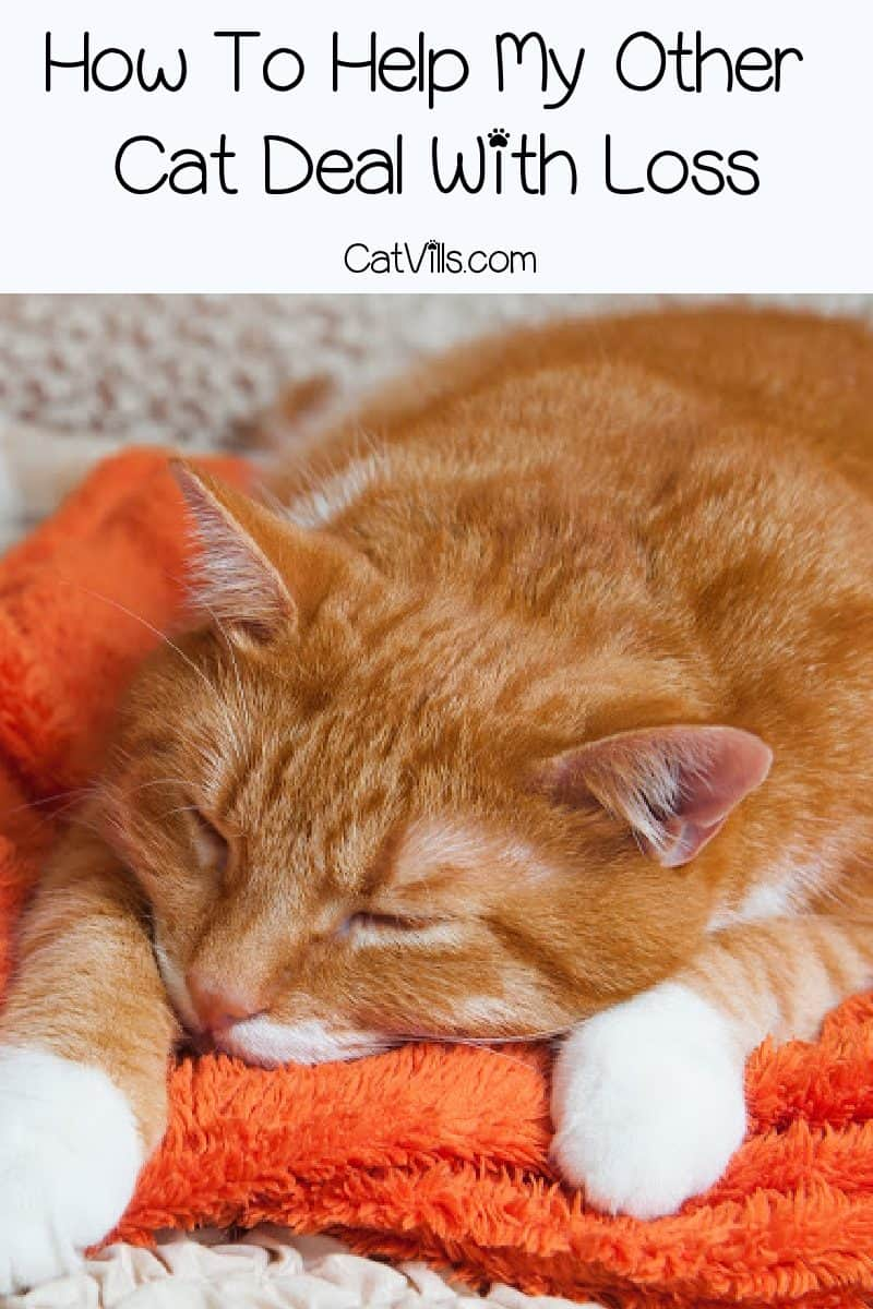 What do you do when your cat is dying? How do you cope or help your other cats? Read on for answers to these tough questions and more.