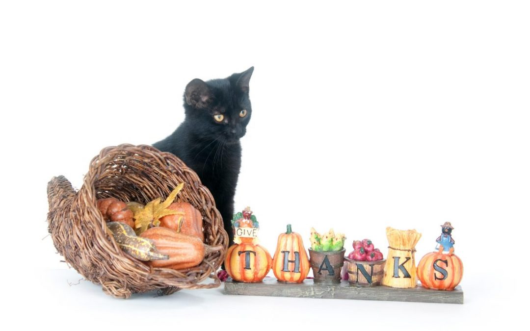 10 Tips to Have a Memorable Holiday If It's Just You and Your Cat