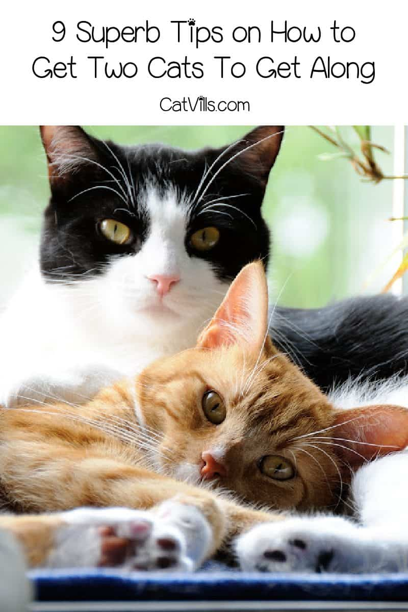 Are you scratching your head over how to get two cats to get along? Read on for 9 superb tips that will bring harmony to your multi-cat home!