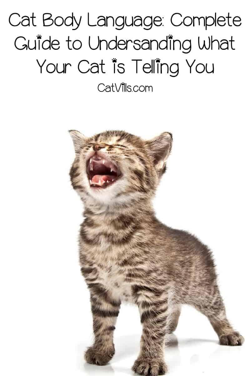 Understanding cat body language is the first step towards really communicating with your feline friends. Read on for our complete guide!