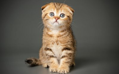 Top 5 LEAST Talkative Cat Breeds (for When You Really NEED a Quiet Home)