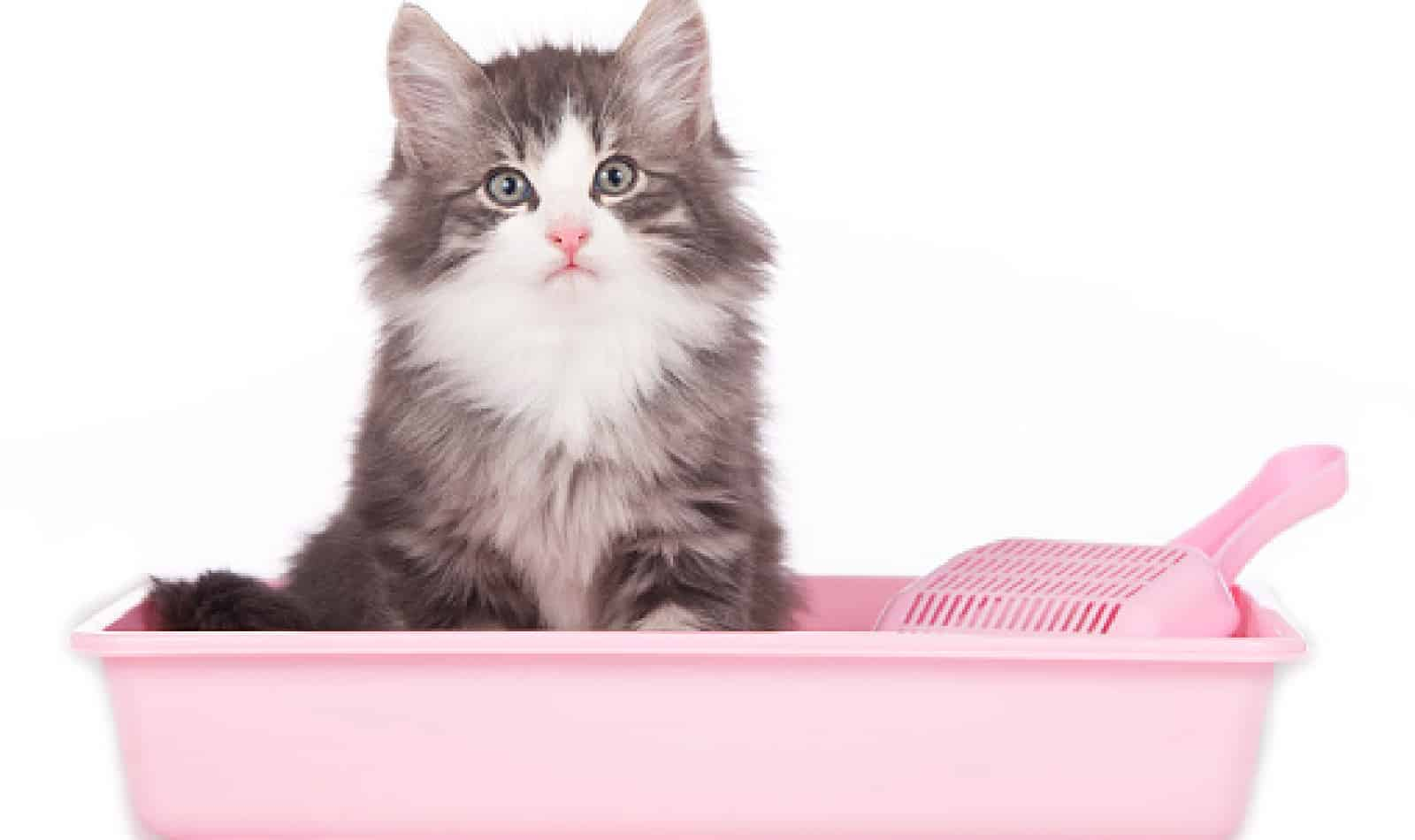Are there any good cat litter alternatives? Why should you even bother looking for one? Find out those answers and more in our complete guide!