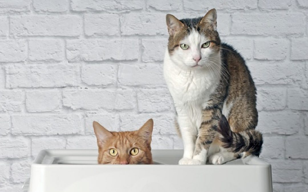 Everything You Need to Know About Cat Litter Boxes