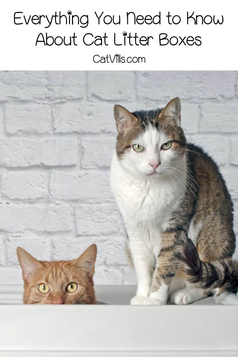 We're sharing literally everything you need to know about cat litter boxes- from the best picks for the box itself to what to put in it. Check it out!