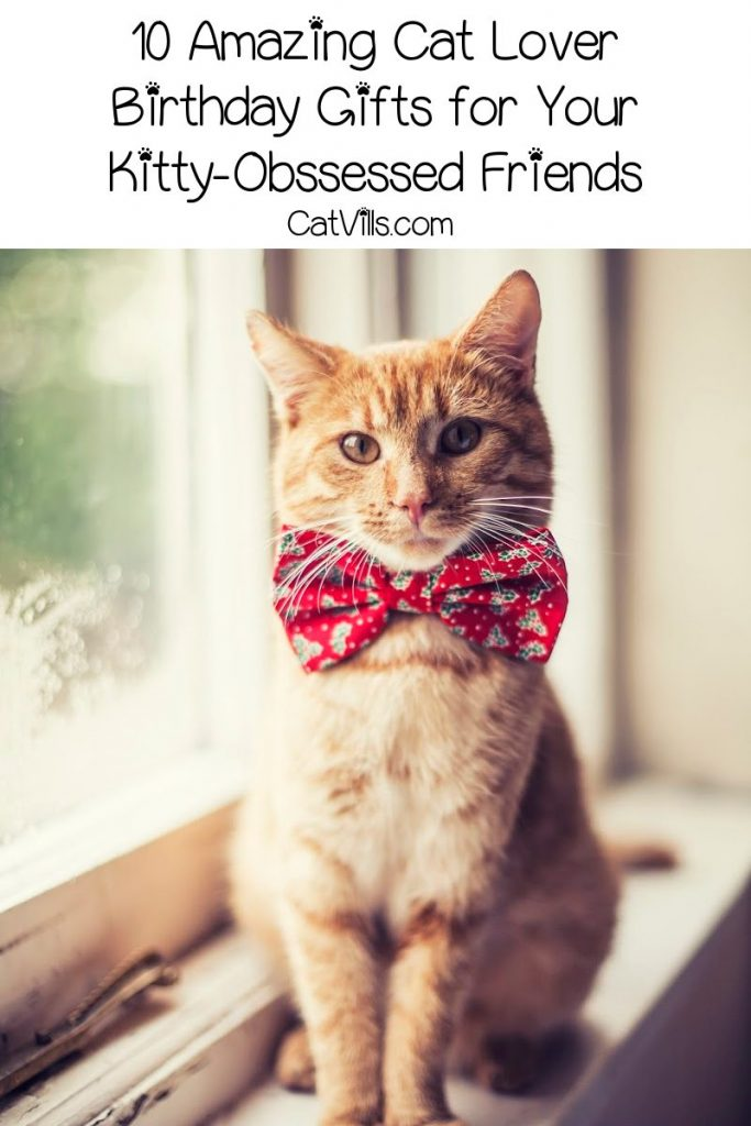Looking for some outstanding cat lover birthday gifts for your kitty-obsessed friends and family? Check out 10 that we love!