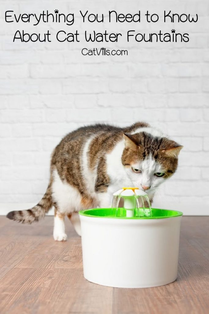 If you're considering getting a cat water fountain, you need to check out our guide first! We'll go over everything you need to know!