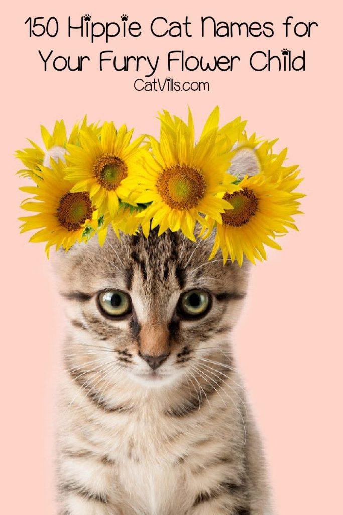 26++ Hebrew female cat names information