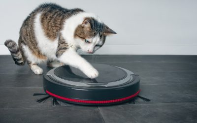 18 Best Vacuums for Cat Litter (with In-Depth Reviews)