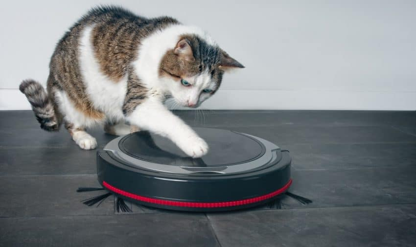 From uprights to handheld to robots, we're looking at all the BEST vacuums for cat litter in every category. Check out our full reviews!