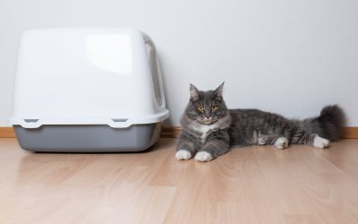 Can I Flush Cat Poop From The Litter Box?