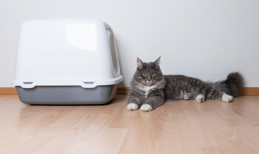 Wondering if you can flush cat poop from your litter box? Read on to find out, plus learn the best way to dispose of your cat's waste.
