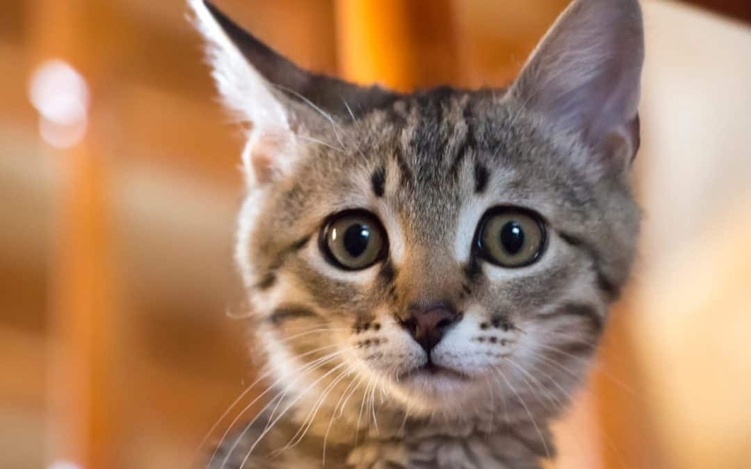Cat Stress Signs: What Causes it, What to Watch For & How to Help