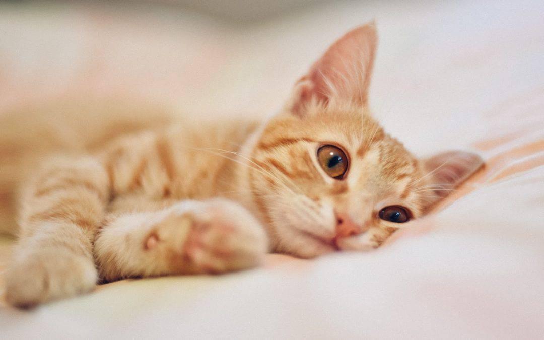 10 ThingsCat OwnersDo That Can Break A Cat's Spirit