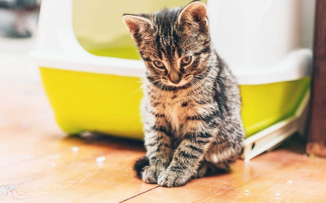 Best Flushable Cat Litter: Top 7 Brands (With Reviews)
