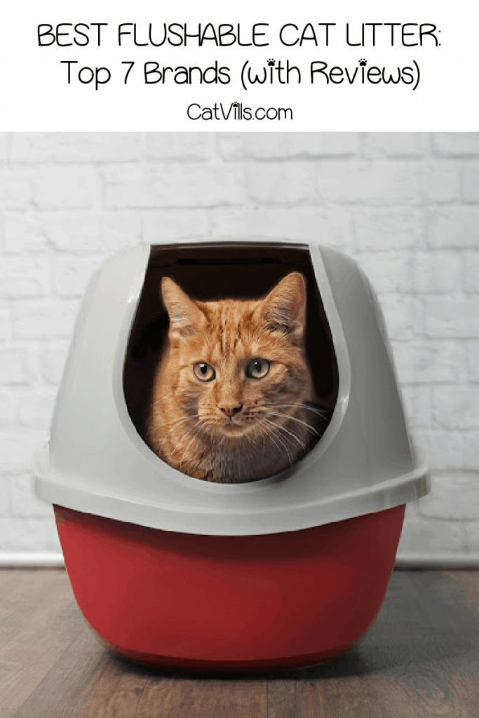 Are you looking for the best flushable cat litter and want to know more about natural litter alternatives? Check out our top picks!