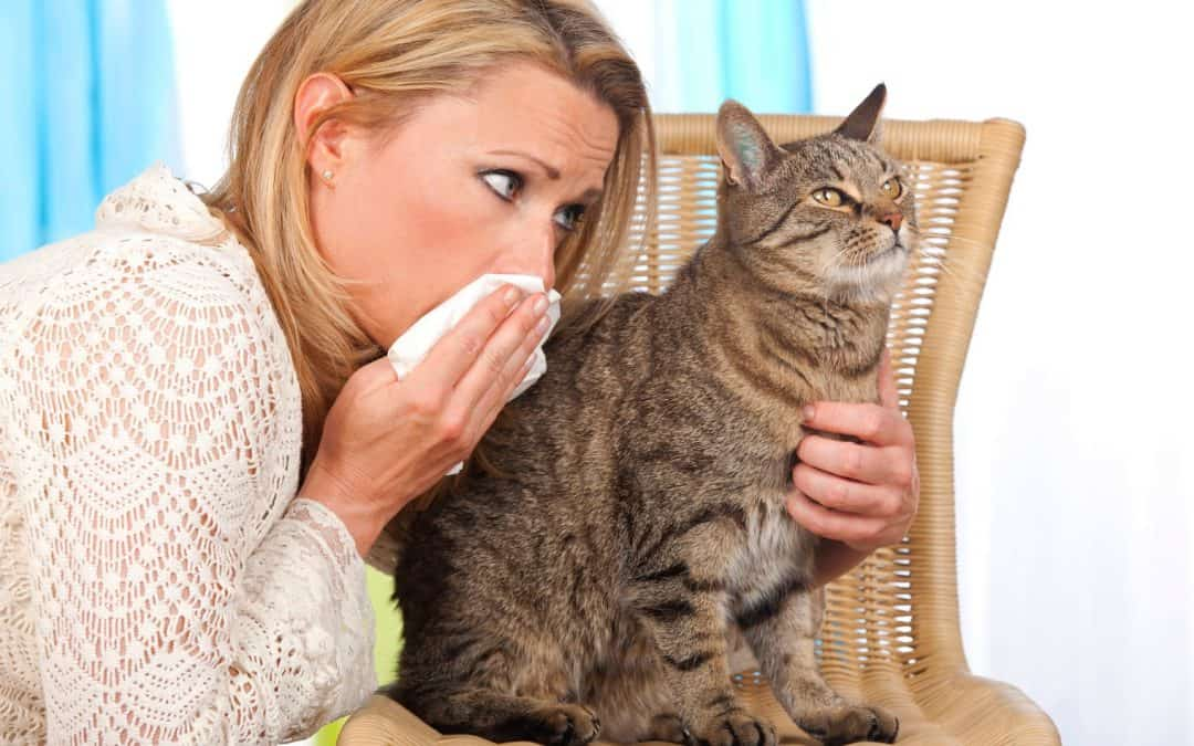 Complete Guide to the Best Cat Wipes for Allergies (With Reviews)