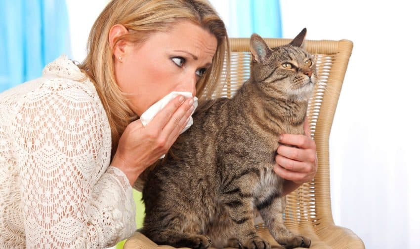 Looking for the best hypoallergenic cat wipes to help you manage dander allergies? Check out our top 5 picks, with complete reviews!