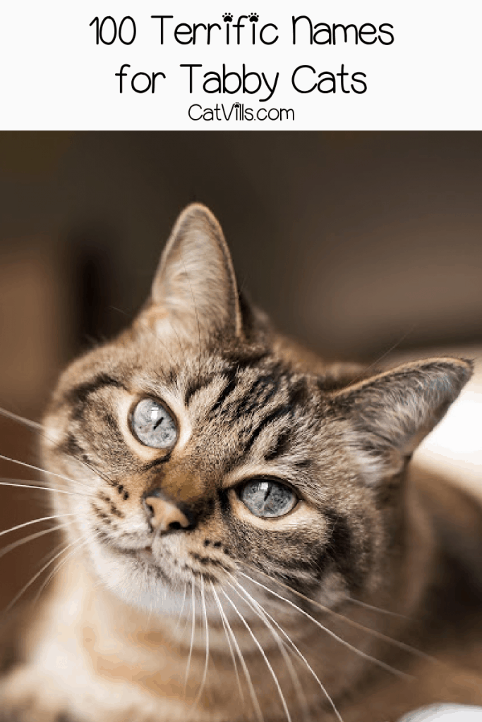 Looking for some brilliant tabby cat names for your new feline friend? Check out 100 that we adore, with 50 each for males & females.