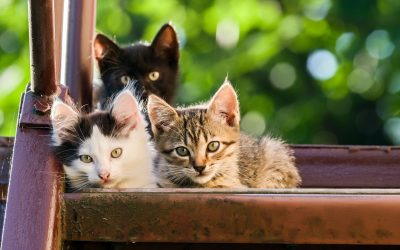 Thinking of Getting a Third Cat? Here's What You Need to Know First!